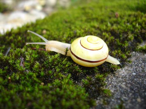 Creglingen Snails