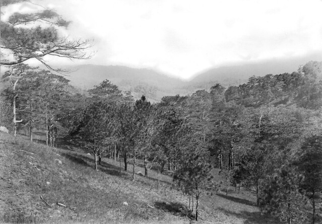 Looking toward Bued River valley from Governor's Hill, Baguio, Benguet, Philippines -- 1900