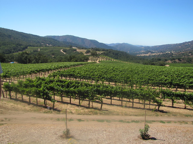 Overlooking the vineyards