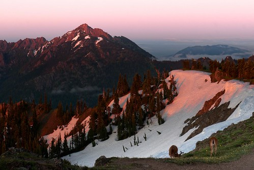 sunset snow landscape olympicnationalpark hurricaneridge deers redmountain