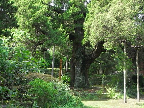 Sat, 17/09/2011 - 10:34 - 鎌倉市の天然記念物に指定されています。
