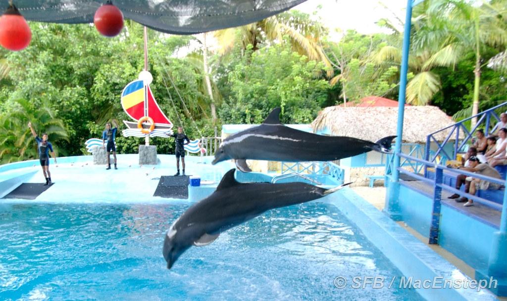 Dolphins / Sea Lions show - Manatí Park | MacEnsteph | Flickr
