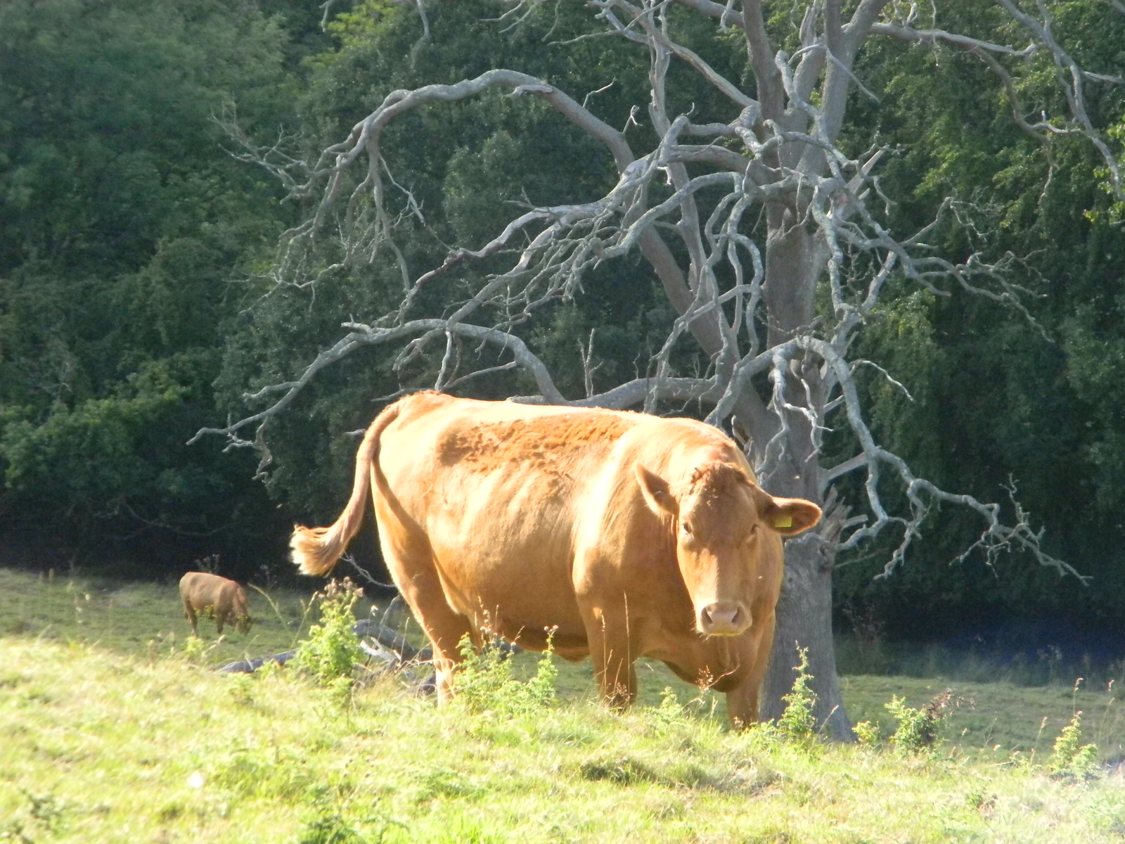 Cow Moreton-in-Marsh Circular