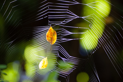 Spider's web catching the sunlight