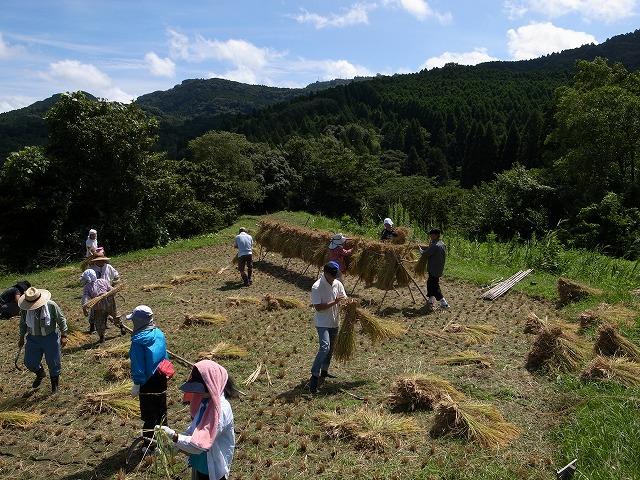 <p>j)刈り取った稲の跡</p>