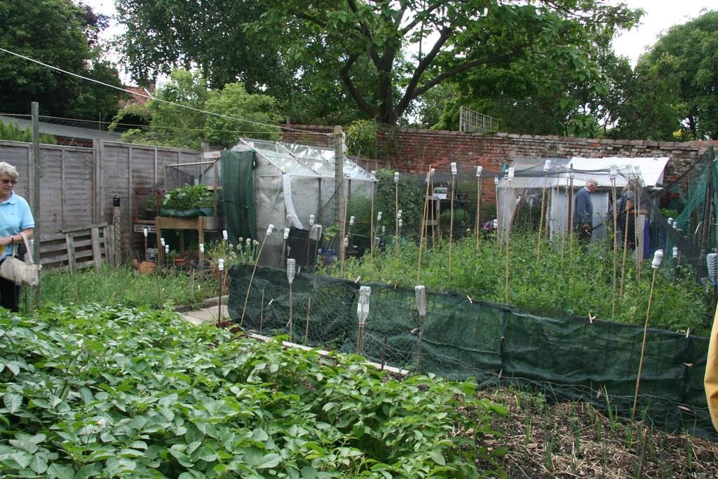 whats popular in gardening