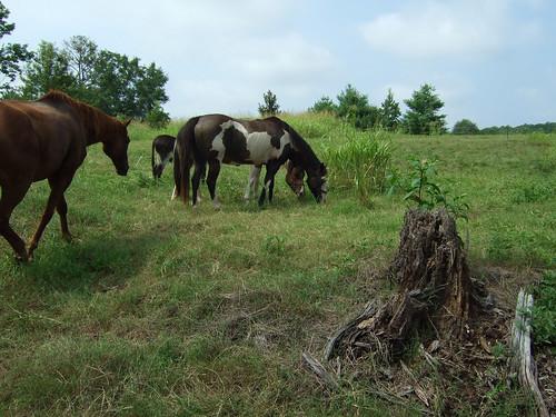 horse ga serenbe