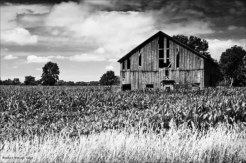 2011 barn clouds cloudy copyright©2011 corn delapidated farm field kswest rustic stevenwest travel portwashington wisconsin usa old rural weathered nikon bw blackwhite kswestphoto