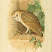 Coloured figures of the birds of the British Islands. v.1