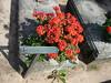 Norimberk, hřbitov, šipky napovídají, kde je hrob Albrechta Dürera, foto: Petr Nejedlý