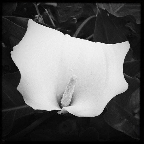 africa blackandwhite abstract leaf desolate iphone flowe iphoneography hipstamatic