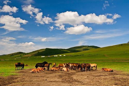 asia mongolia mng blinkagain