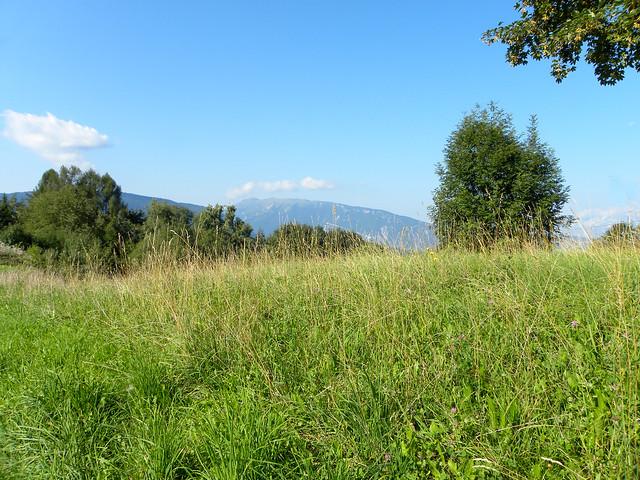 Tambre meadows