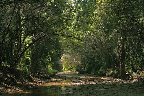 nature landscape 50mm woods louisiana stream naturepreserve creekbed mrgreenjeans gaylon catisland canonef50mmf25compactmacro gaylonkeeling