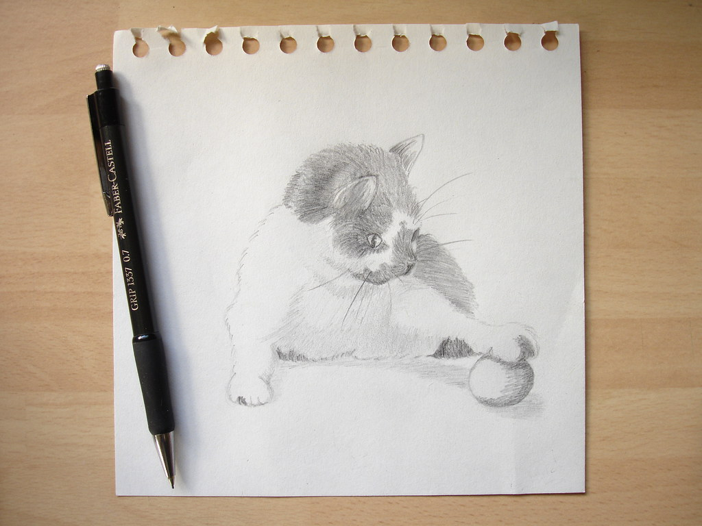 Pencil drawing of matilda the kitten by etchings plus finally got a laptop