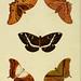 De uitlandsche kapellen, voorkomende in de drie waereld-deelen Asia, Africa en America d.2 (1779)