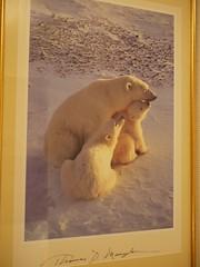 水, 2011-08-10 18:21 - 可愛い熊さんのポスター