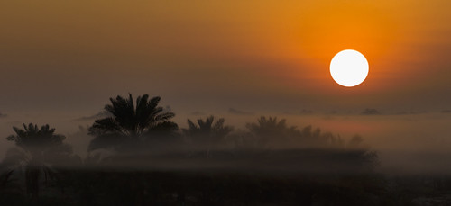 leica trees sunset orange sun mist tree misty sunrise bahrain palm apo summicron asph mohammad m9 75mm taqi ashkanai