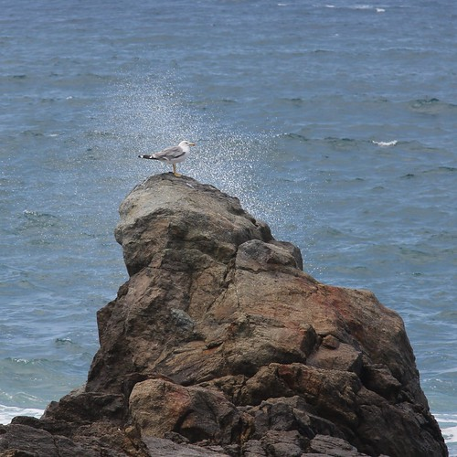 A seagull taking a shower | by Tilemahos Efthimiadis