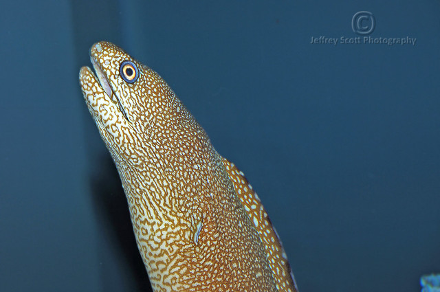 Moray EEL at the Florida Aquarium