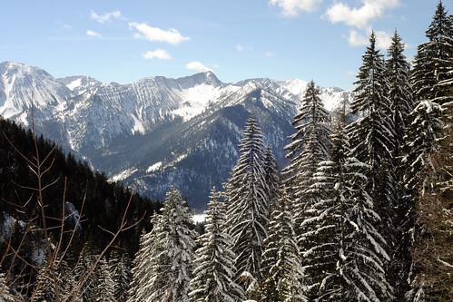 Bavarians Vote to Stop Extinction