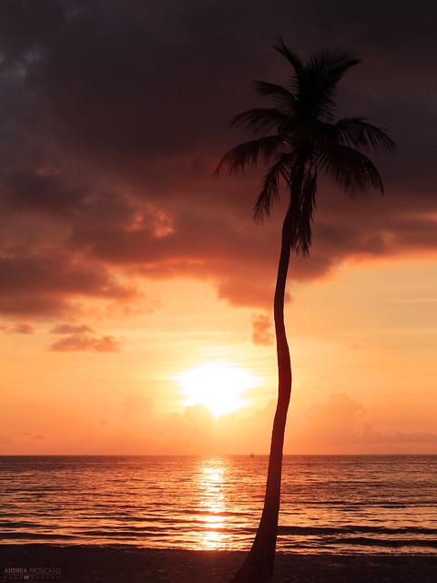 Morning Light - Fort Lauderdale (Florida)