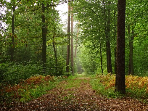 road autumn trees summer mist green fall nature leaves fog forest landscape woods path poland polska lodzkie łódzkie