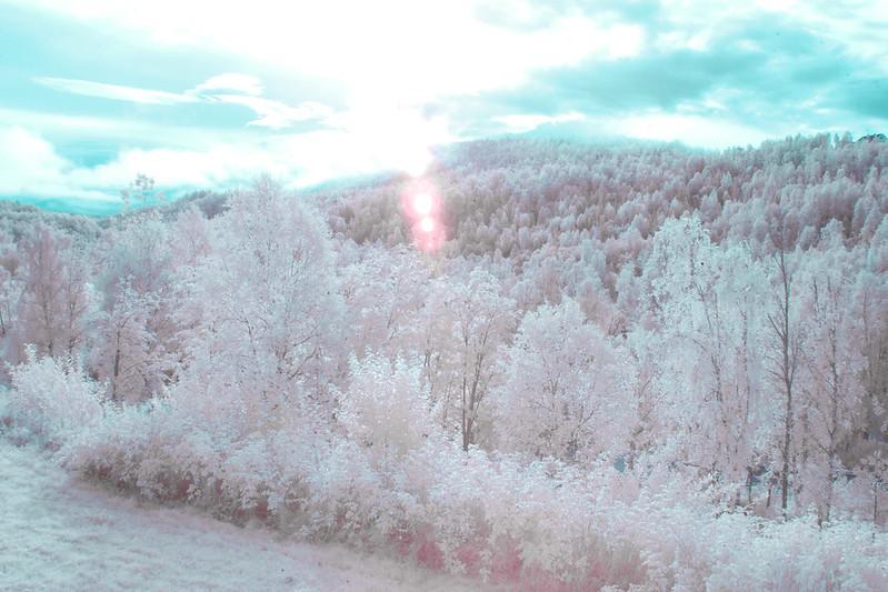Canon EOS 10D IR conversion test image