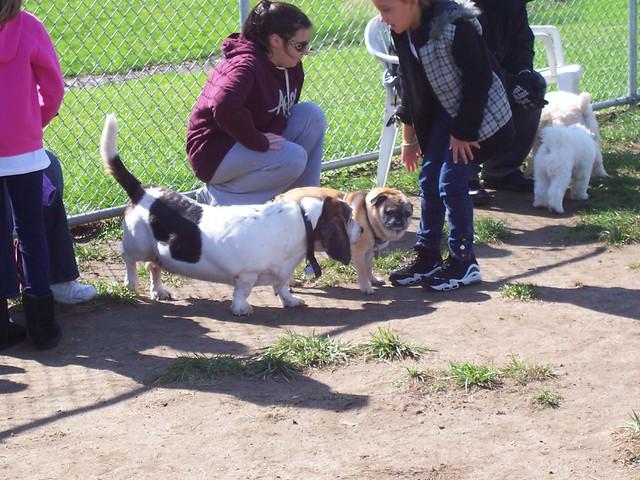 Making friends at the dog run