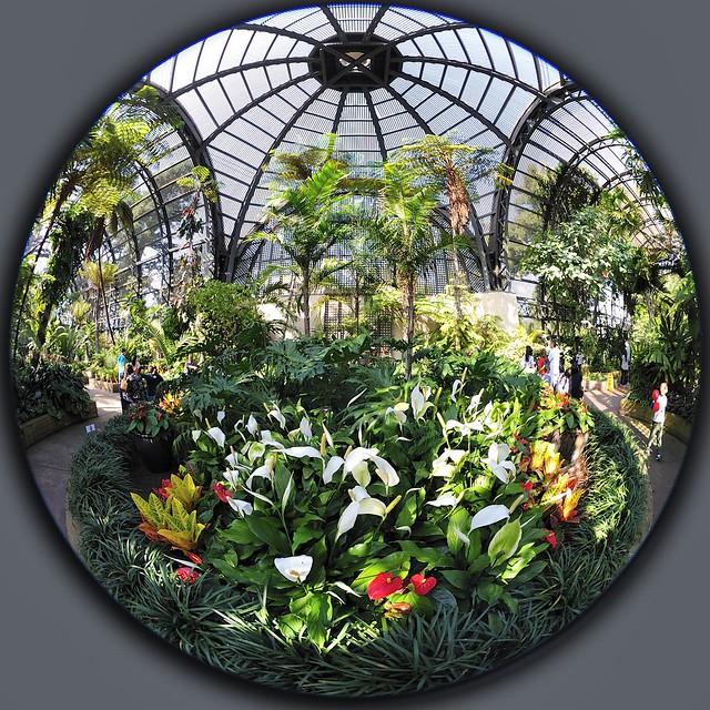 Fisheye Botanic Garden Balboa Park Nikon Nikkor 8mm F/2.8 2.8 Fisheye circular