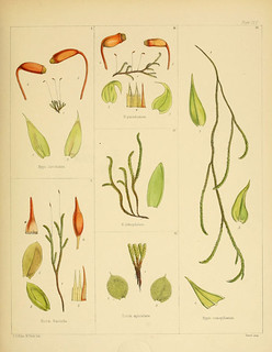 n318_w1150 | by BioDivLibrary