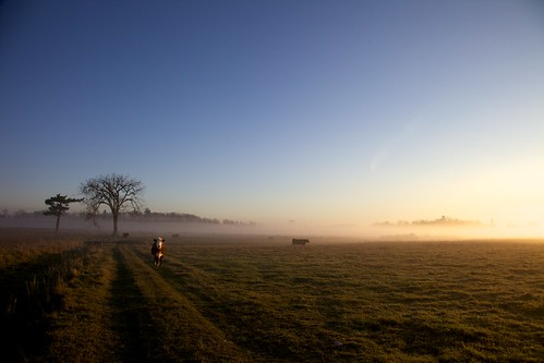 morning light mist field fog cow glow glorious farmer mooo day312 11118 day312365 3652011 365the3211edition