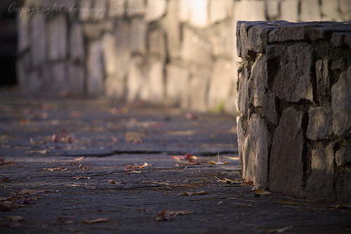 autumn leaves wall canon eos path low pointofview sidewalk walkway 7d pathway tommysimms theworldthroughmyeyes canoneos7d canon7d copyrighttommysimms 1106111006