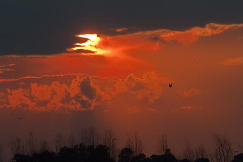 sunset sc birds animals wildlife southcarolina wildliferefuge lowcountry savannahnationalwildliferefuge sclowcountry
