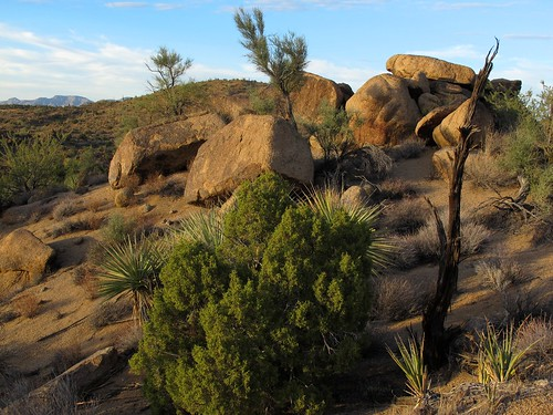 november light wild arizona cactus southwest nature landscape outdoors rocks afternoon shadows desert granite remote saguaro exploration discovery yucca joshuatrees plantlife outthere naturesfinest ephedra junipers mohavecounty mormontea zoniedude1 canonpowershotg11 poachierange ecosystemoverlap