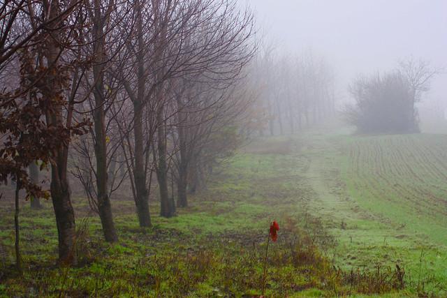 Tre foglie rosse           (Esplora #459)