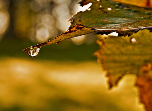Water Drop and Bokeh | by scott1723