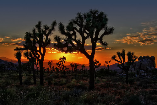 california park ca travel light sunset vacation sky orange usa sun color nature night canon landscape photo nationalpark interestingness interesting rocks colorful skies glow desert cloudy bracket picture joshuatree july photographers explore geology hdr highdynamicrange mojavedesert 2010 adjust infocus denoise 40d topazlabs photographersnaturecom davetoussaint photoengine oloneo nationalsunset