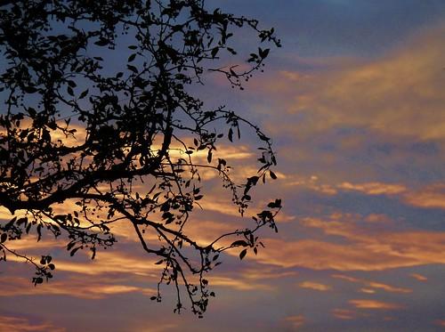morning sunrise golden