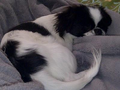Sleepy Oliver Resting