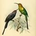 A monograph of the Nectariniidae, or, Family of sun-birds