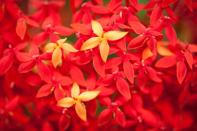Tropical Gardens Of Maui 7005