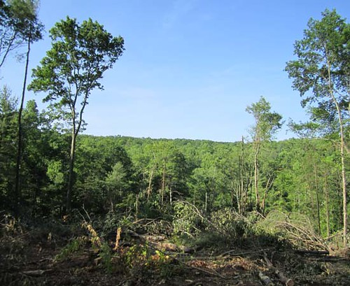 The homesite as it appeared just after the timber was cut.