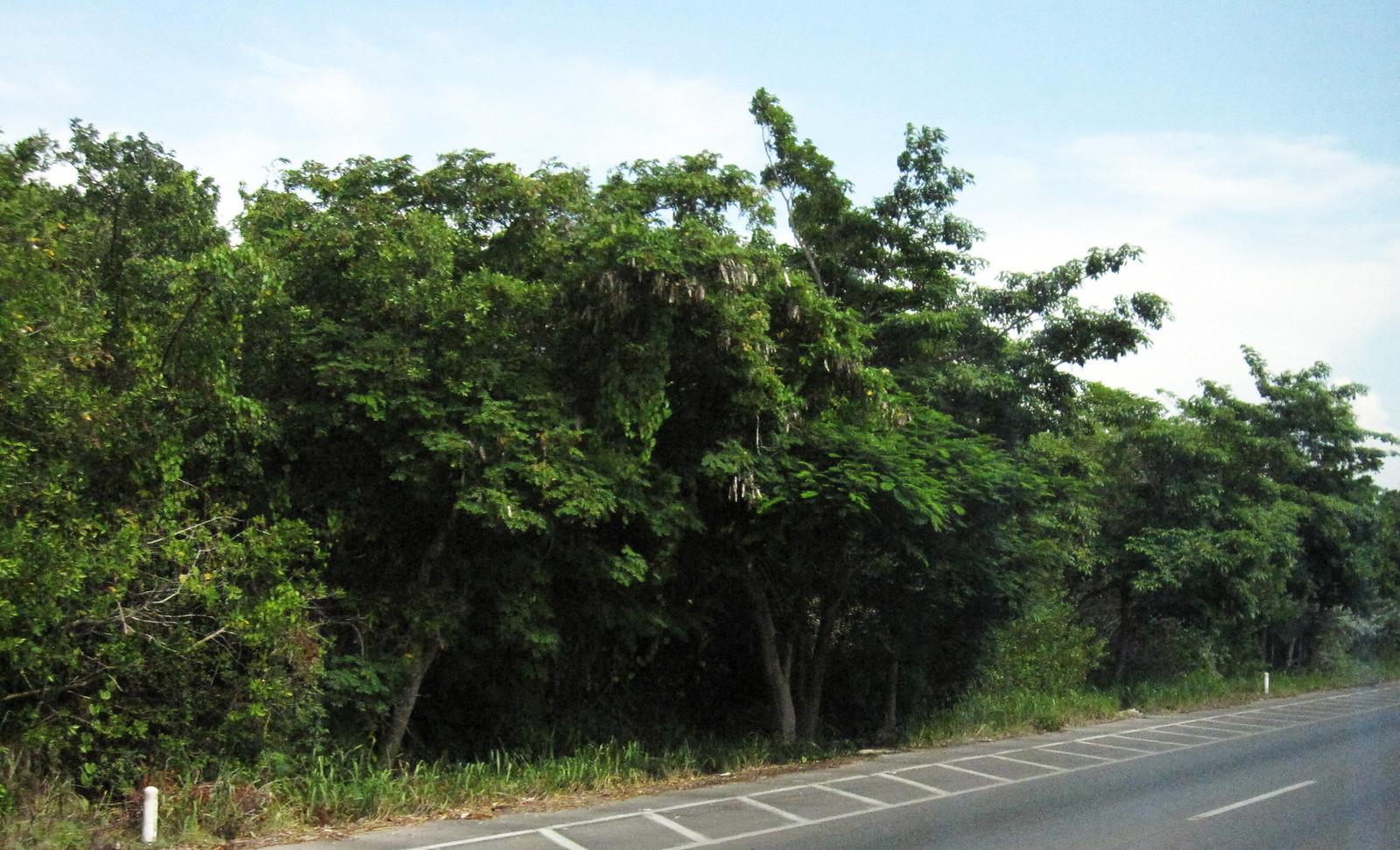 Mérida 159