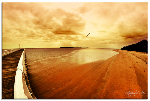 light shadow sky reflection beach clouds sunrise reflections pier fly sand nikon waves eagle jetty flight wideangle fisheye queensland railing predator tidal herveybay seaeagle d90 colorphotoaward mygearandme fotografdude