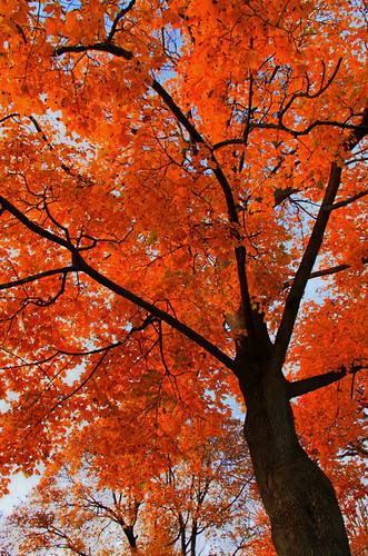 life trees color tree canon landscape maple woods colorful auburn foliage falltrees 2011 autumntree auburnny lastcolor