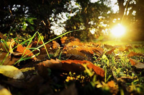autumn cambridge light sunset fall grass leaves university flare botanicgardens