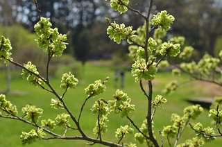 Spring at the Morton Arboretum 322 | by Michael Kappel