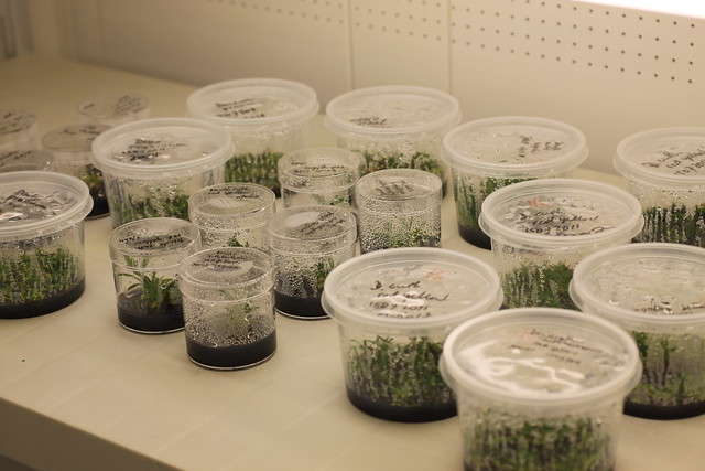 some in vitro containers