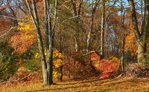 yard shelly cromwell autumn johnjmurphyiii connecticut newengland november usa 06416 foliage